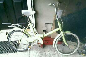 Bike chicken chaser