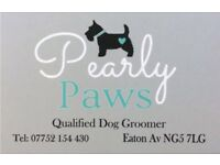 Pearly Paws qualified dog groomer