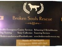 1 - 1 Dog and Puppy Obedience, Training and Rehabilitation