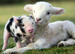 Petting zoo for birthdays, parties, fairs and special events