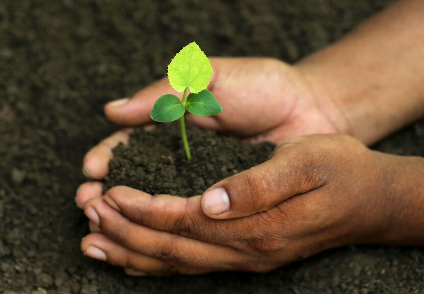 How to Help Your Plants Grow Faster