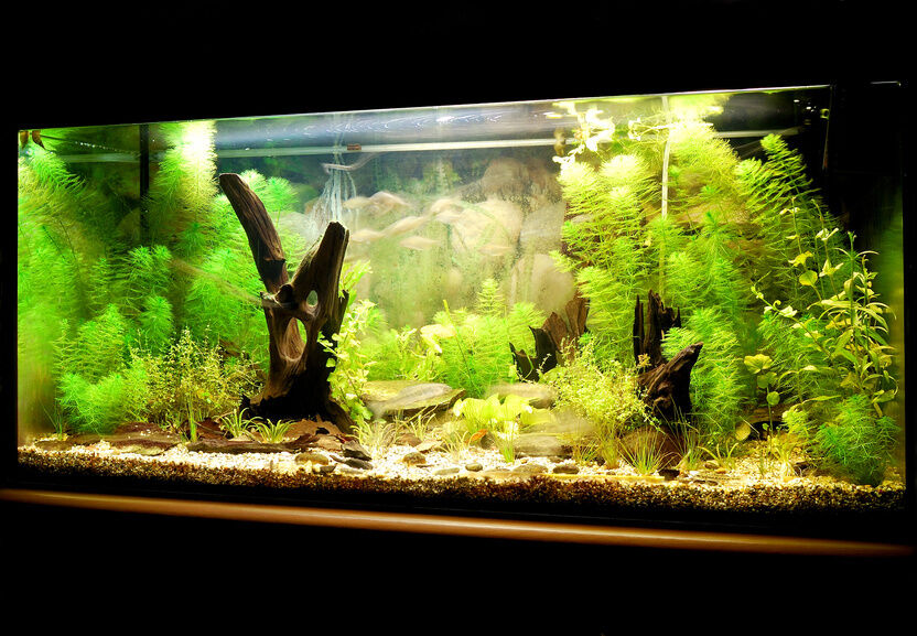 Top 10 Fish Tanks Ebay