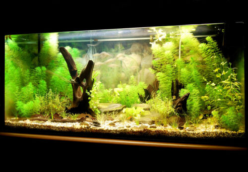 How To Set Up And Maintain A 10 Gallon Aquarium Ebay