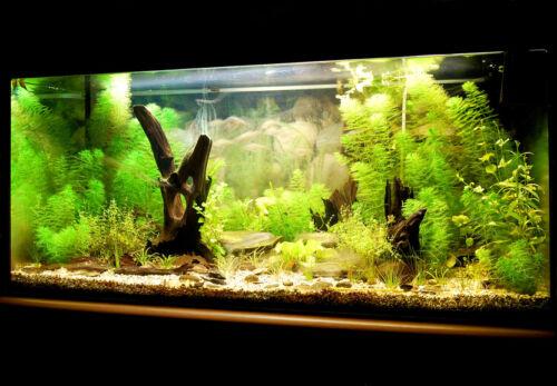 Das sollten Sie beim Onlinekauf eines Luftausströmers für das Aquarium beachten