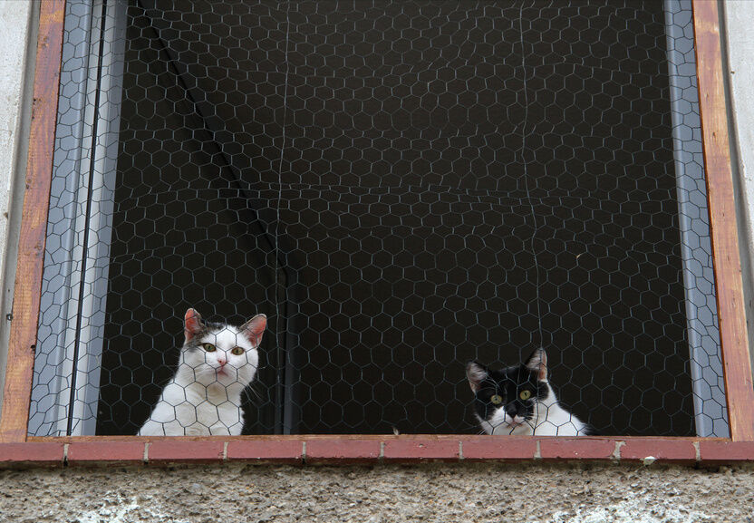 Your Guide to Buying Wire Mesh to Keep Your Pets Safe