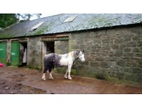 Mare for loan Tentsmuir