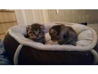 3 adorable little girl kittens