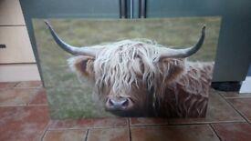 Highland Cattle Canvas Print