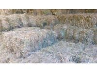 HAY FOR SALE Best quality meadow hay. Free delivery 40+ bales 10 miles radius Horsham £4.25 a bale.
