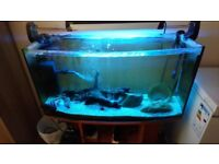 235L Fish tank with extras