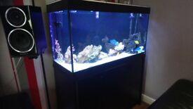 Fluval rome 200l fish tank
