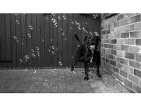 Dog Walking & Pet Portrait Services in Skegness
