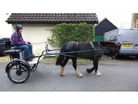 Driving cart/trap for Cob/Pony in Cambridge