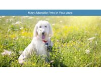 Looking for a trusted, insured pet sitter in your area? Check out Pawshake today! New Romney