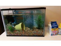 Fancy Goldfish with 24l tank, pump, food, water treatment, decorations etc