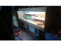 Bearded dragon vavarium ,all the equipment you need