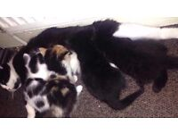 4 Kittens for sale .... Ready for rehoming 01/07/17