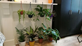 Set of plants and pots