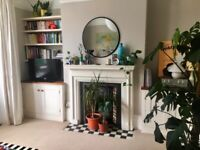 Beautiful 1 bed Flat for Rent