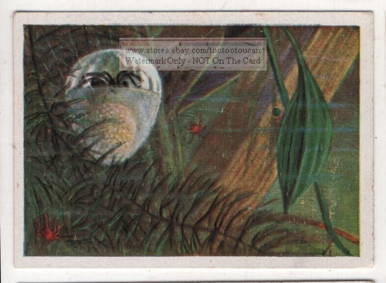 Water Spider 1930s Trade Ad Card