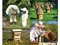 Required experienced Beekeeper