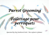 GROOMING FOR PARROTS - TOILETTAGE POUR PERROQUETS
