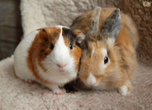 Small Animal Care and Boarding