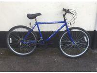 "GENTS BLUE MOUNTAIN BIKE 17"" FRAME £45"