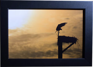 Awesome High Quality Prints! (Wildlife, city, nature, and more!) Cambridge Kitchener Area image 8
