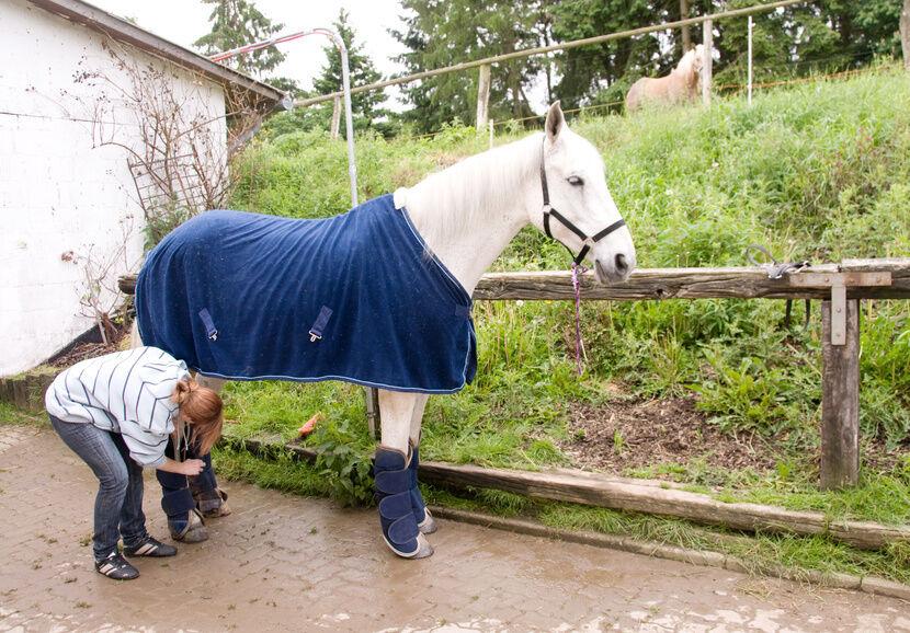 Pferde-Gamaschen aus verschiedenen Materialien