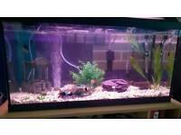 Aquarium with 3 fish and accessories