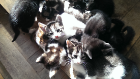 lots of adorable kittens!!