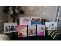 Set of canvas dog pictures