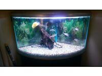 Stunning 305 litre corner aquarium