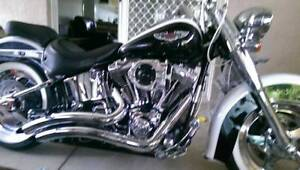 2005 harley davidson softail deluxe Forest Glen Maroochydore Area Preview