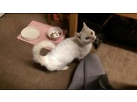 Small, White Cat Missing in Pontefract, West Yorkshire