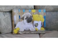 Pug Canvas Picture