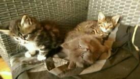 3 little boys kittens