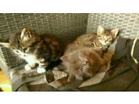 3 little boys kittens