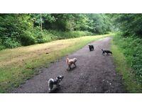 EXPERIENCED DOG WALKER, PUTNEY
