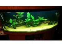 5 ft (450l) Jewel Bow Front Aquarium with Fish and Accessories