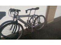 Barracuda Mountain Bike, Excellent Condition