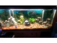 3ft fluval tropical fish tank
