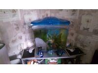 fish tank plus accessories