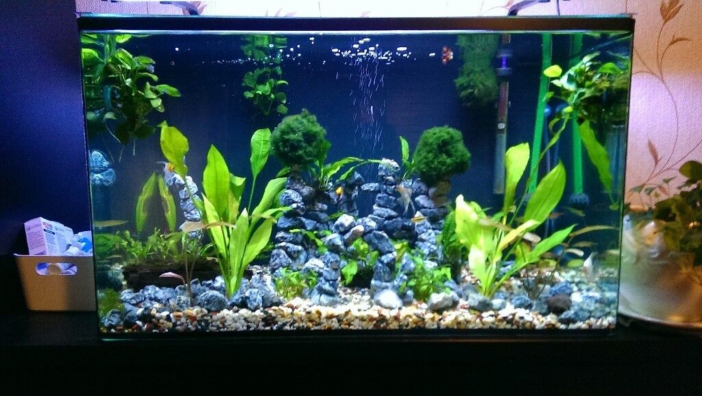 Empty Fish Tank And Fish Tank With Fish Plants Equipment