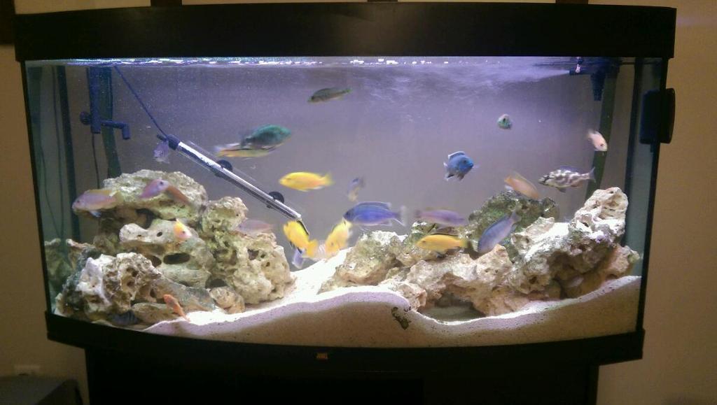 Cichlid Fish Tank Cichlid Full Aquarium Fish