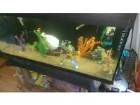 4ft fish tank with extras