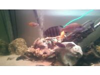 Fish tank 300 litre