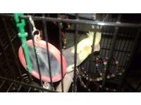 Bird for good home for free