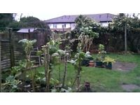 Large Double Room With its Private Garden, Available For Couple Or 2 Friends, Bills Included, Zone 2